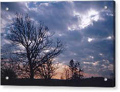Oak In Sunset Acrylic Print