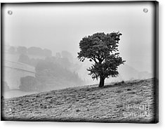 Acrylic Print featuring the photograph Oak Tree In The Mist. by Clare Bambers