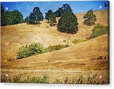 Oaks On Grassy Hill Acrylic Print by Bonnie Bruno