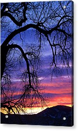 Acrylic Print featuring the photograph Obeisance by Jim Garrison