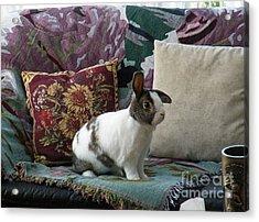 Obelix The Rabbit  Acrylic Print