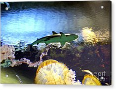 Ocean Encounter Acrylic Print by Kevin Moore