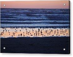 Ocean Sunset Acrylic Print