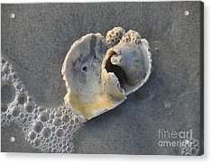 Ocean's Gift Acrylic Print