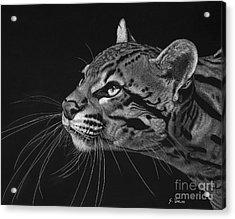 Ocelot Acrylic Print