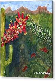 Ocotillo Spring Acrylic Print