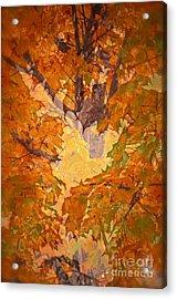 October In Washington Acrylic Print by Gwyn Newcombe