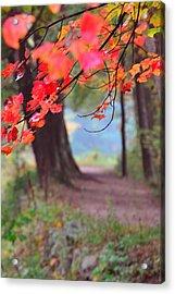 October Walk Acrylic Print by Mandi Howard