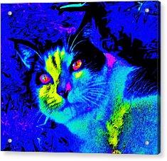 Oden Oreo Acrylic Print by Julie Hiskett