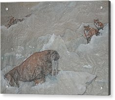 Of Walrus And Red Fox Acrylic Print