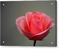 Office Rose Acrylic Print by Al Cash