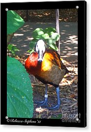 Official Ambassador Acrylic Print by Rebecca Stephens