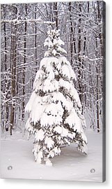 Oh Christmas Tree Acrylic Print by Krista Ouellette