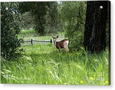 Acrylic Print featuring the photograph Oh Deer by Tonia Noelle