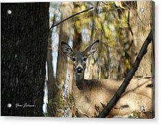 Acrylic Print featuring the photograph Oh Deer by Yumi Johnson