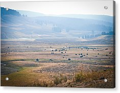 Acrylic Print featuring the photograph Oh Home On The Range by Cheryl Baxter