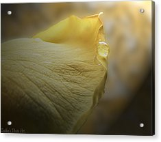 Acrylic Print featuring the photograph Oh So Soft Is The Kiss Of Dew by Debbie Portwood