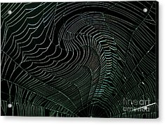 Oh What A Twisted Web..... Acrylic Print by Monica Poole