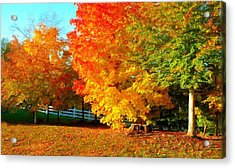 Acrylic Print featuring the photograph Ohio Autumn Maples by Dennis Lundell