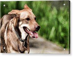 Oily Dog Acrylic Print