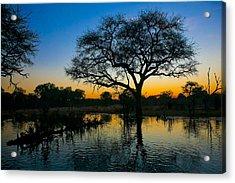 Okavango Acrylic Print