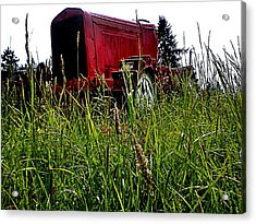 Ol Red  Acrylic Print by Kevin D Davis