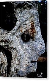 Old Ancient Olive Tree In Spain Acrylic Print by Colette V Hera  Guggenheim