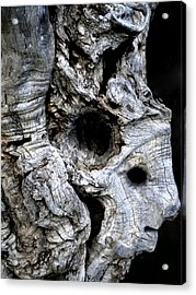 Old Ancient Olive Tree Spain Acrylic Print by Colette V Hera  Guggenheim