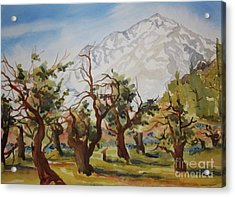 Old Apple Orchard Mt Tom View Acrylic Print