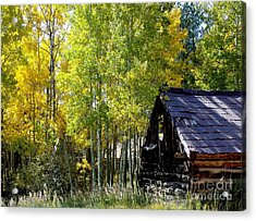 Old Cabin In The Golden Aspens Acrylic Print by Donna Parlow