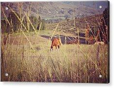 Old Country Road Acrylic Print by Sarai Rachel