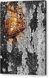 Old Heart  Acrylic Print by Natee Srisuk