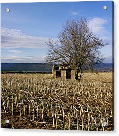 Old Hut Isolated In A Field. Auvergne. France Acrylic Print by Bernard Jaubert