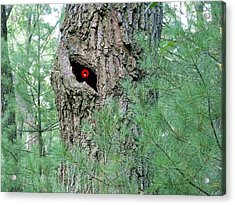 Old Man Tree Acrylic Print by Dave Dresser