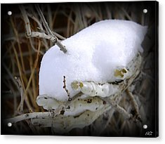 Acrylic Print featuring the photograph Old Man Winter's Hand by Michelle Frizzell-Thompson