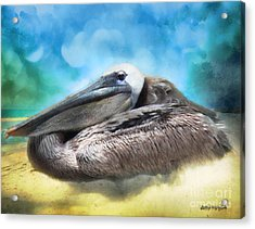 Old Mr. Pelican Acrylic Print