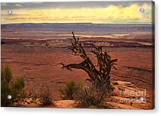Old One Acrylic Print by Robert Bales