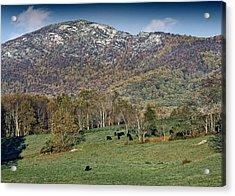 Old Rag Mountain - Shenandoah National Park - Virginia Acrylic Print by Brendan Reals