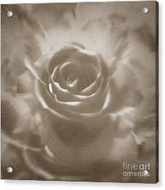 Acrylic Print featuring the digital art Old Rose by Johnny Hildingsson