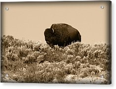 Old Timer Acrylic Print by Shane Bechler
