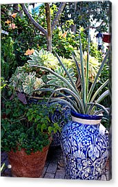 Old Town Potted Cactus Acrylic Print by Anne Raczkowski