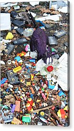 Old Toys Acrylic Print by Todd Sherlock
