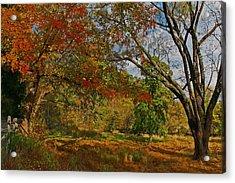 Old Tree And Foliage Acrylic Print