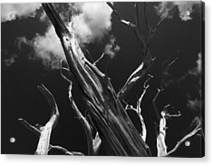Acrylic Print featuring the photograph Old Tree by David Gleeson