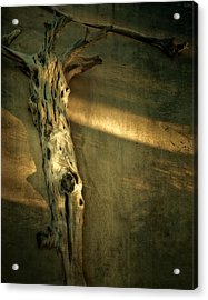 Old Tree In Sand Acrylic Print by Mario Celzner