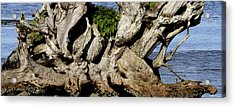 Old Tree  Acrylic Print by Mary Gaines