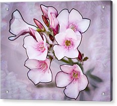 Oleander Blossoms Acrylic Print by Jim Painter