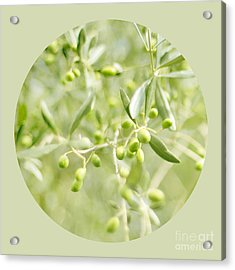 Olive O Acrylic Print by Linde Townsend