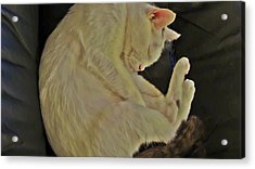 Oliver Safe And Sound Acrylic Print by Joan Meyland