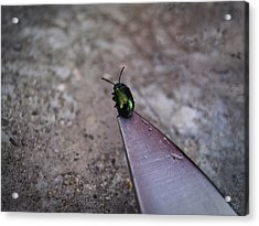 On A Knife Edge Acrylic Print by Nafets Nuarb